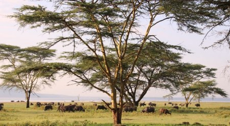 Lake Nukuru National Park