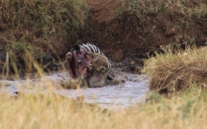 Ngorongoro Crater - not our photo - we were a few seconds too late to set this one up