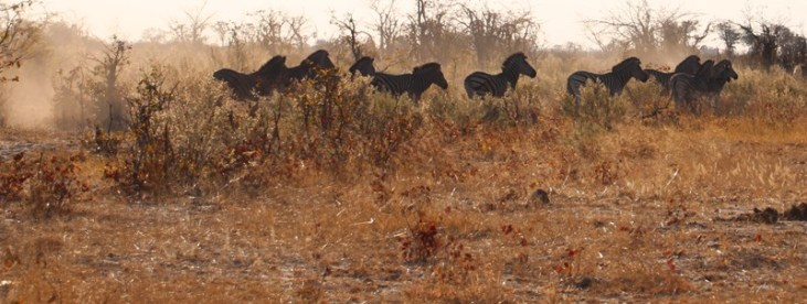 Guided walk through the Okavango Delta