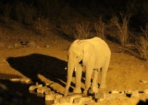 Etosha National Park - Elephant drinking at the waterhole beside the campsite!