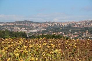 The view near the farmhouse towards Perugia