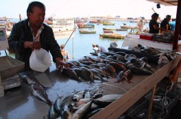Fisherman's catch at the port