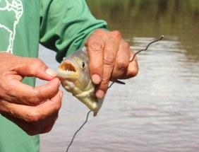 Fishing for piranhas for dinner