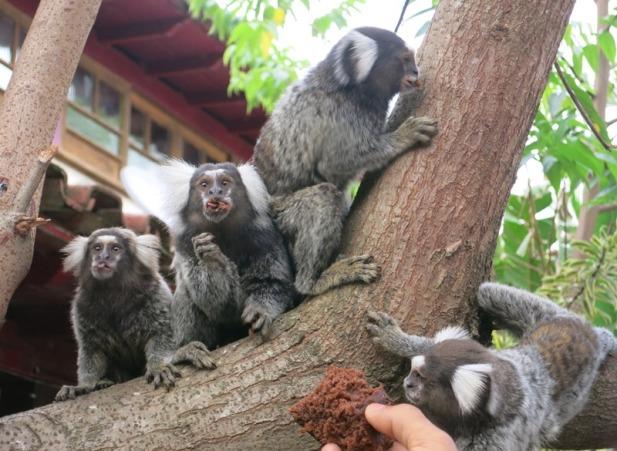 Little monkeys at the hostel eating cake